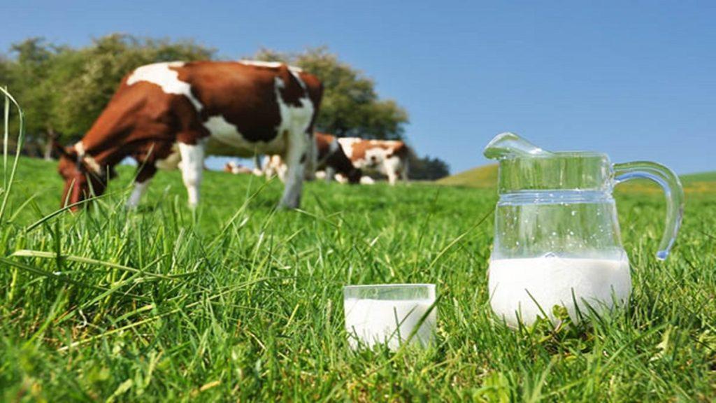 маркировка молока и молочной продукции