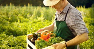 Крестьянское фермерское хозяйство