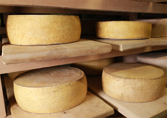 Пивной сыр
