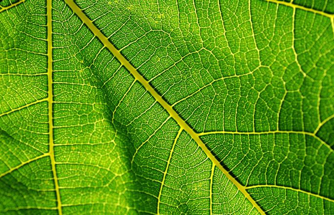 Хлорофилл-зеленый эликсир красоты и здоровья!
